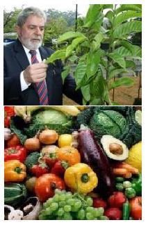 Agricultura familiar orgânica (pesquisa), porta principal, salutar para uma vida saudável.