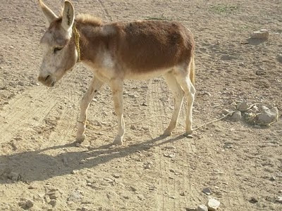 My Pet Donkey