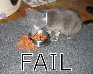 gato_fail_2.JPG