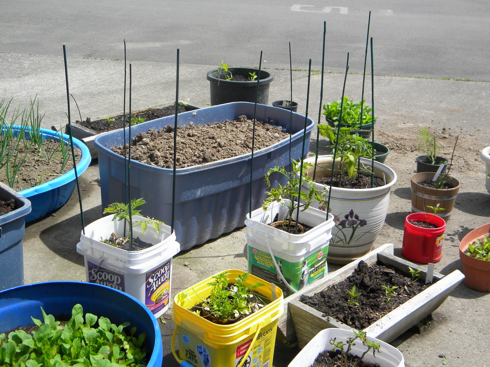 Recycled container garden part ii container gardening in an rv - Recycled containers for gardening ...