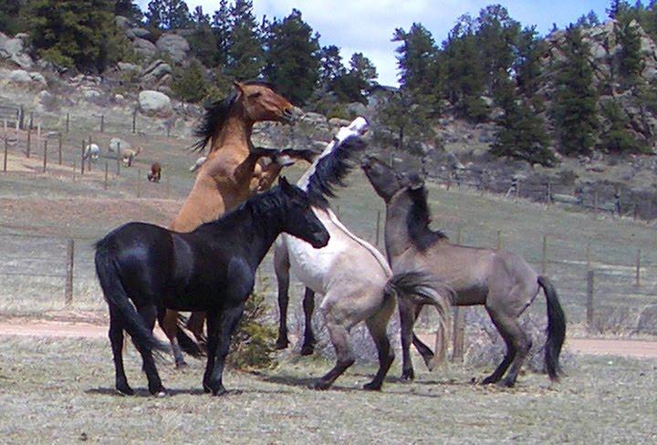 Mustangs Musts...