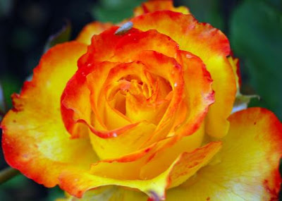 Best flowers in the world best flowers images
