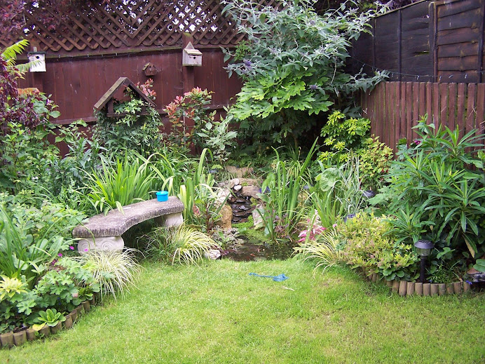 My Wildlife Garden