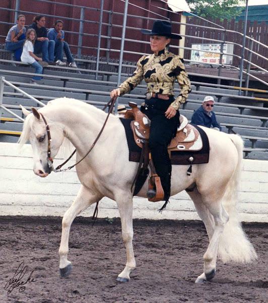 Half Arabian Show Horse 2002