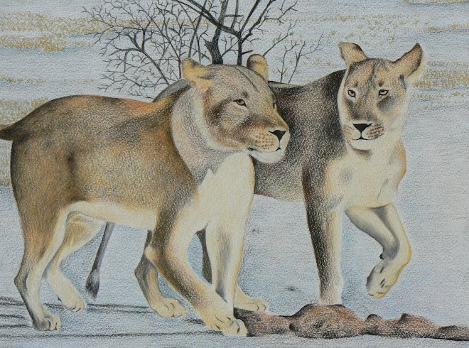 Pair of Lionesses