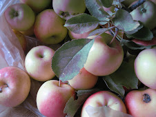 "A word fitly spoken is like apples of gold in settings of silver"" Prov. 25:11"