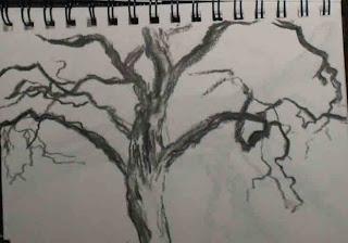 beech tree at Doxford