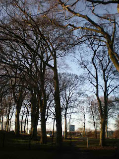 Beech Trees at Doxford