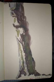 Beech, watercolour in Moleskine