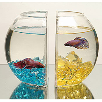 Ariana has thoughts too ze fish bowl of death for Fish bowl petsmart