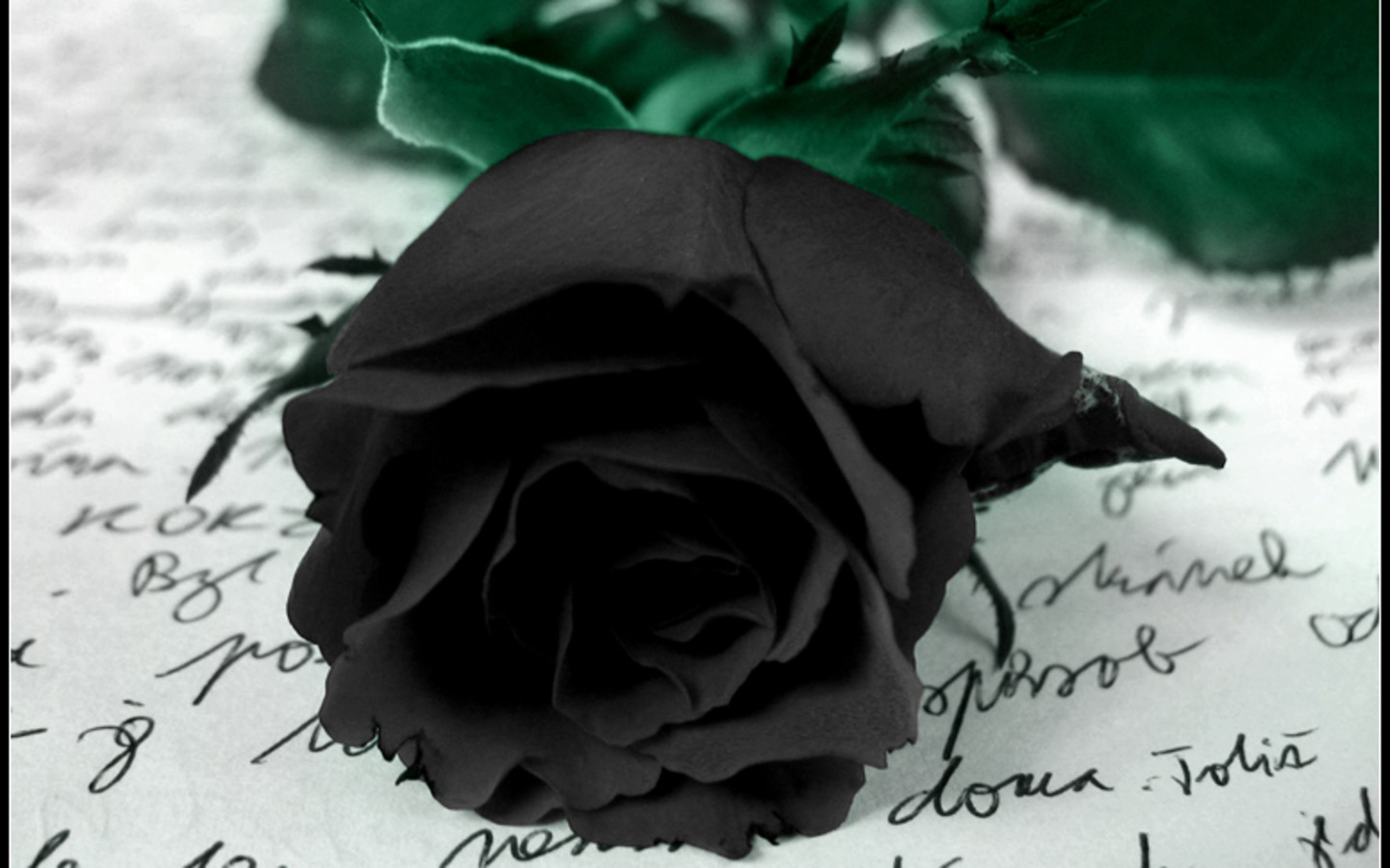 Colourful Wallpapers: Black Rose