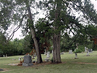 Ancient Cedars in Smithfield Cemetery, North Richland Hills, Texas