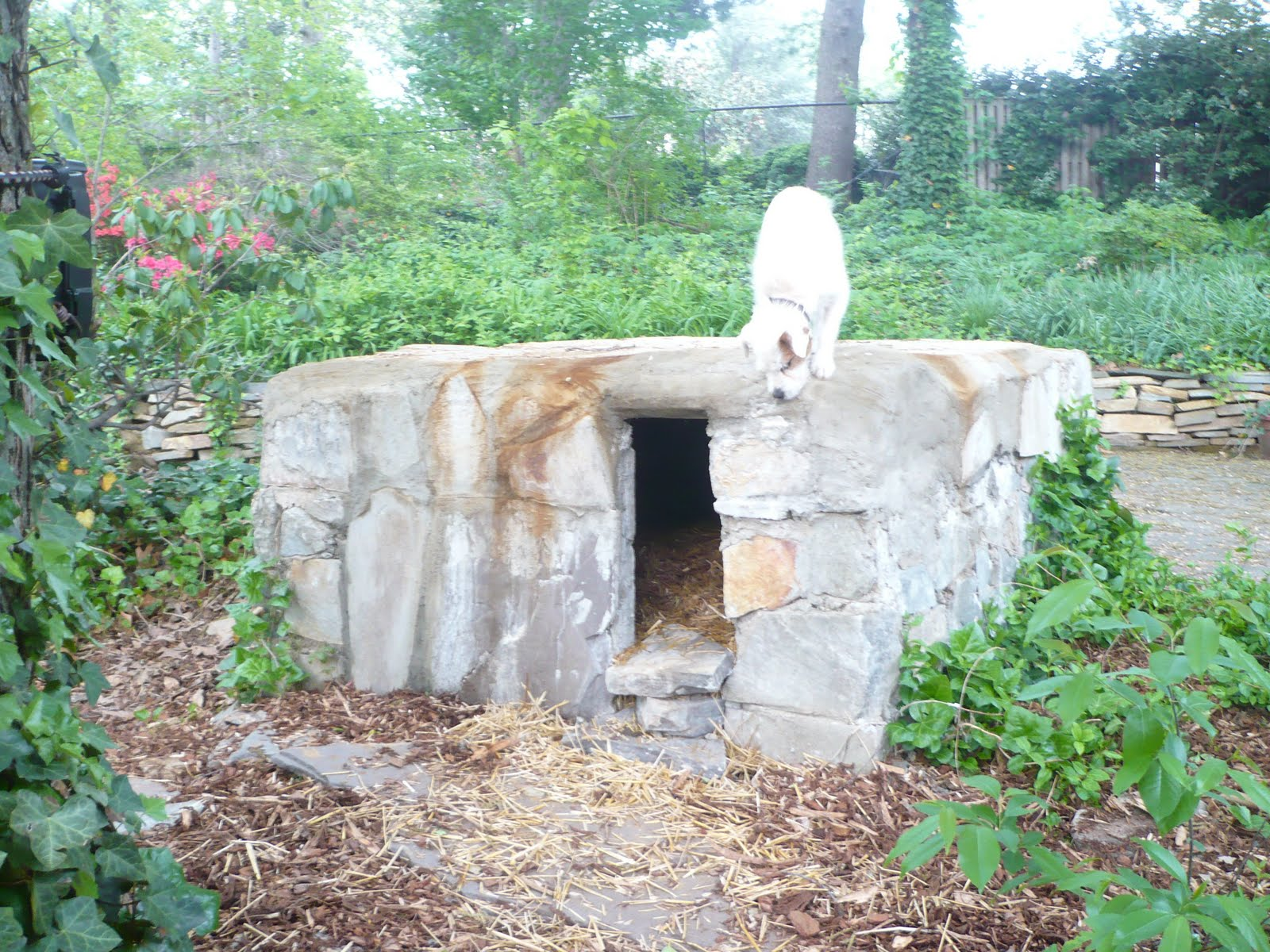 Man Carves Cave With Dog : Terrierman s daily dose the doggy man cave