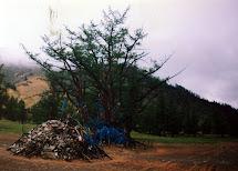 Зуун Салаа Мод