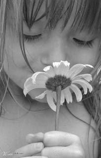 flor hermosa mundo poesía foros de poemas