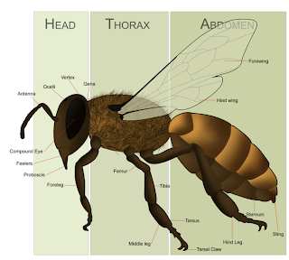 What part of the bee are you?