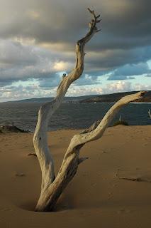 australia, Yallingup, tree, travel