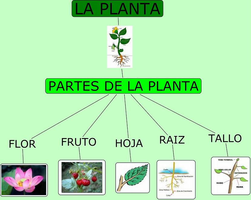 La planta la planta y sus partes - Cuales son las plantas con flores ...