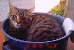 Cat on Pot Studios