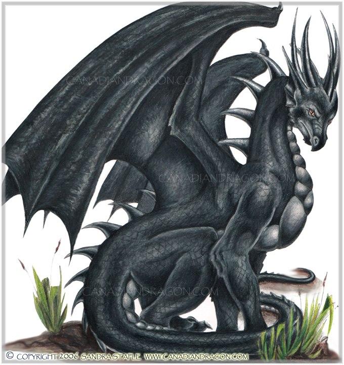 A quoi vous fait penser ce mot? (en images) - Page 2 Black-dragon
