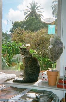 Sylvia Katt in The Window