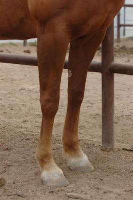 Manos y pies de pelaje cremoso