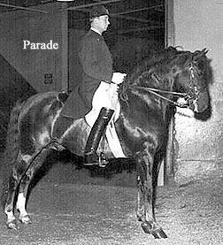 Podhajsky montando a Parade