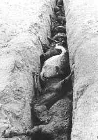 Caballos sacrificados en una zanja