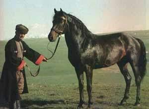 Kabardín
