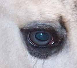 Ojos de color ambarino con trazos celeste