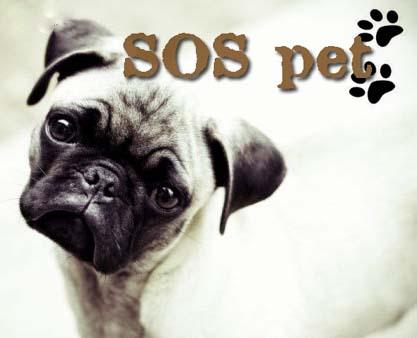 SOS pet ♥