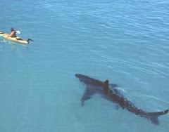 Menekülés csónakban a cápa elől