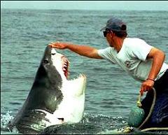 A kíváncsi fehér cápa