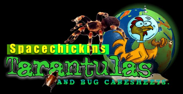 Spacechickins Tarantulas