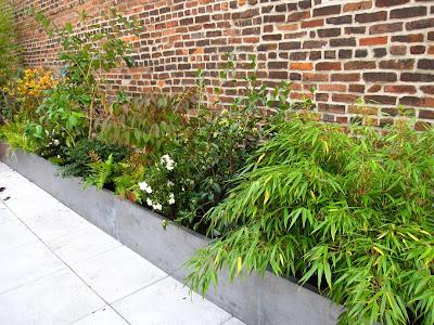 Roof Garden Plant List Above From Left To Right Viburnum Dilatatum Michael Dodge Linden Arrowwood Hakonechloa Macra Japanese Ribbon Grass