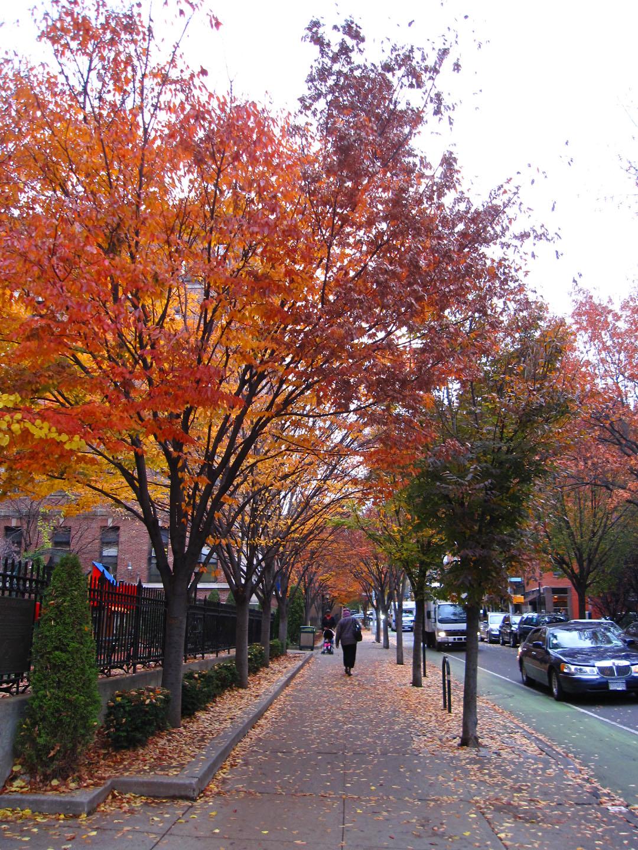 http://3.bp.blogspot.com/_PVsgqPyZ-W8/TOnzQZx5O9I/AAAAAAAAkBc/igBsmTyQMWQ/s1600/Zelkova+trees.jpg