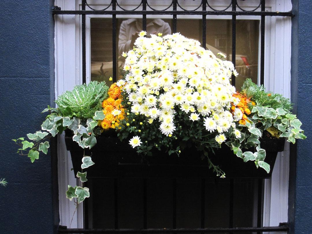 http://3.bp.blogspot.com/_PVsgqPyZ-W8/TOnzTZ6XshI/AAAAAAAAkBk/nxAU5gNal9k/s1600/fall+flower+box.jpg