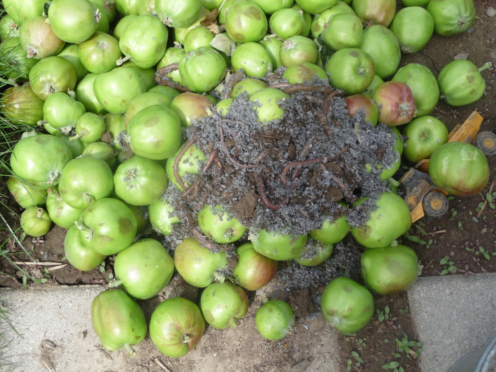 ATTIC CLUTTER: WORMS n APPLES