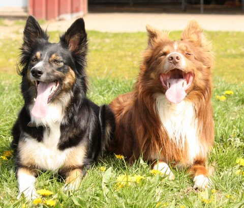 Sheila og Pixel Hvalpe/puppies