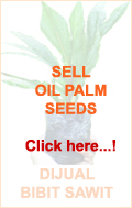 palm oil seeds bibit sawit 2
