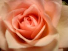 rosa:-)