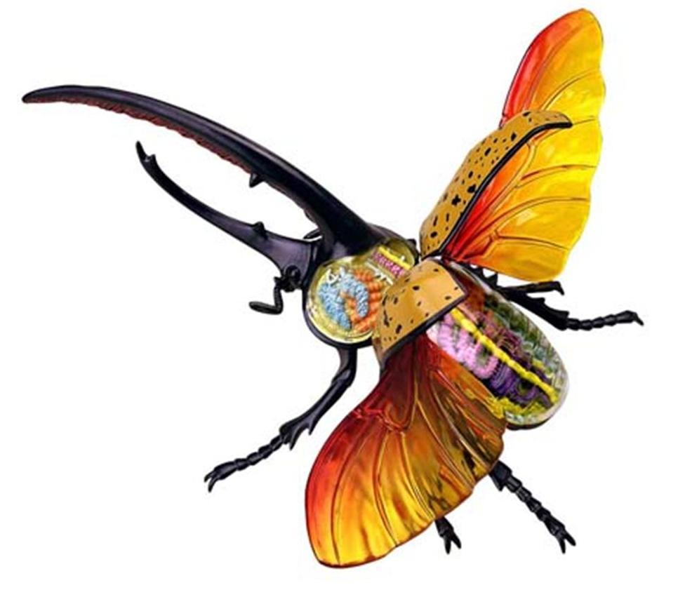http://3.bp.blogspot.com/_PctkNxjZVWw/TOF7HiFd0rI/AAAAAAAAJ0o/6i4l16A3gR4/s1600/insecte.jpg