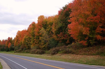 brilliant fall foliage near Victor NY