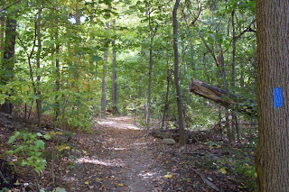 blue trail in the woods, Crescent Trail, Town of Perinton NY