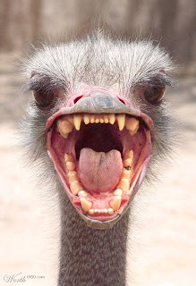 scary ostrich, courtesy of worth1000.com