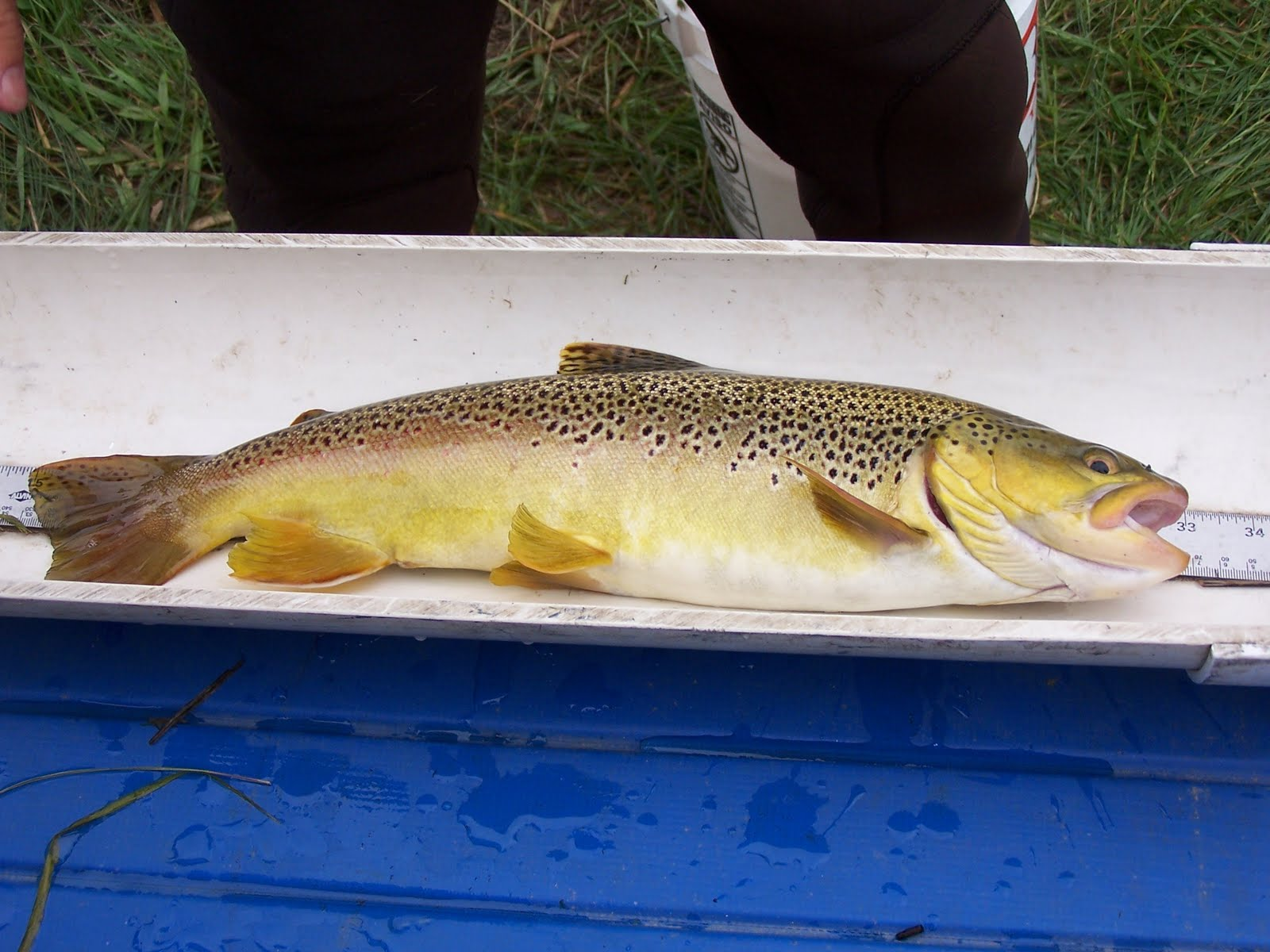 Idaho nature notes silver creek intern 39 s report part 2 for Silver creek fishing report