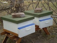"""Colmenas en el apiario experimental del Centro Apícola """"El Chinital"""" probando esta nueva tecnología"""