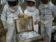 Monitoreando la mortandad natural del ácaro Varroa