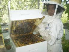 ¡Llegó el día de la cosecha de miel!