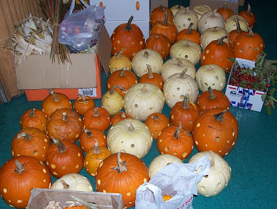 All the pumpkins we carved for center pieces 45 to be exact
